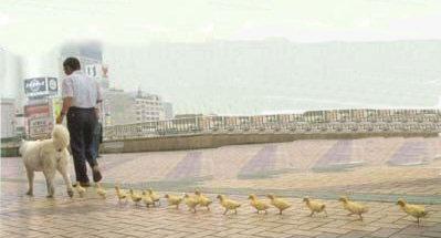duck_imprint